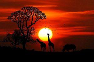 guenstig Urlaub machen - guenstige Safaris